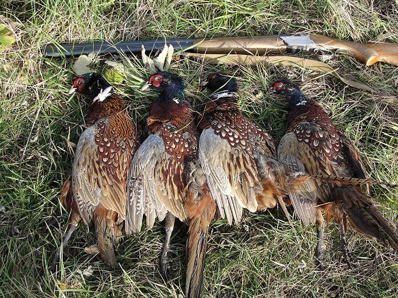 сего птицы на которых охотятся в россии тату тематике играм